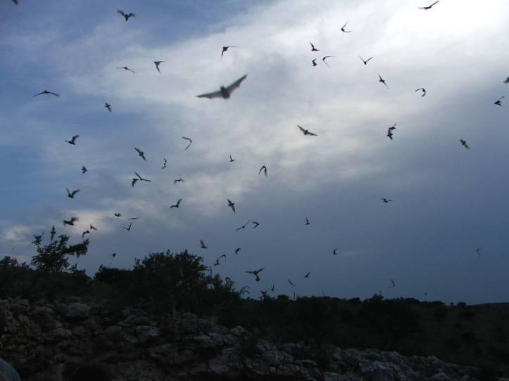 Bat stroll