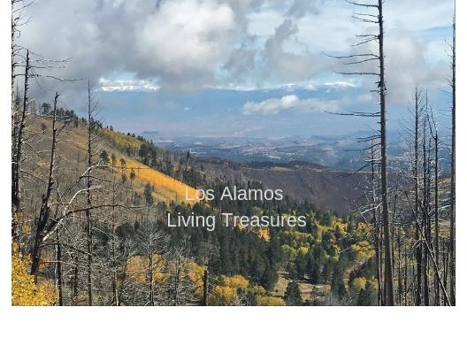Los Alamos Living Treasures