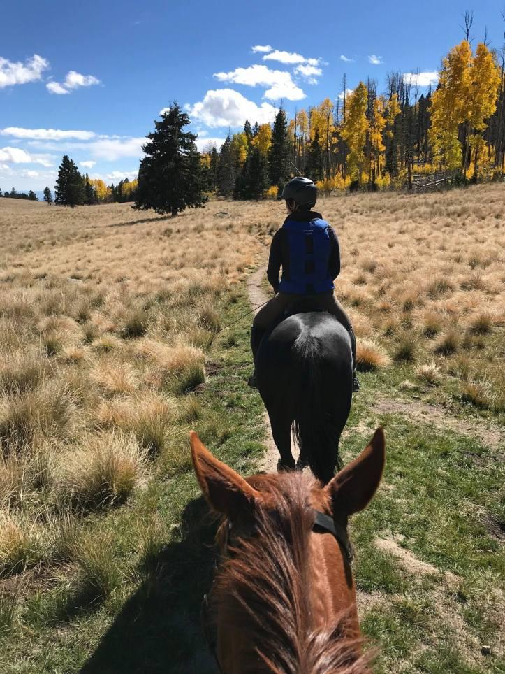 Trail-horses.jpg