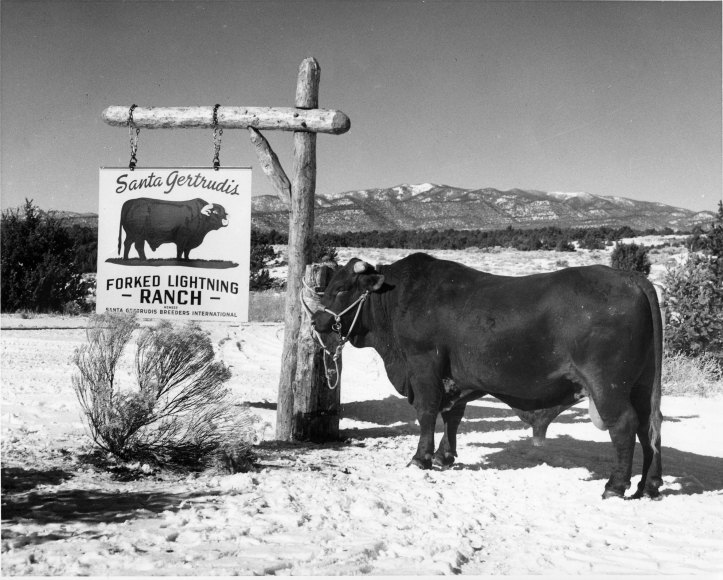 Unknown Bull by Sign.jpg