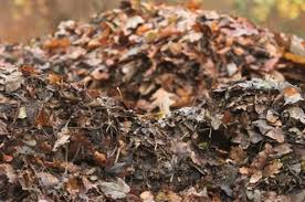 Zero Waste Tip: Turn Your Fall Leaves Into Gardener's Gold - Los Alamos Reporter