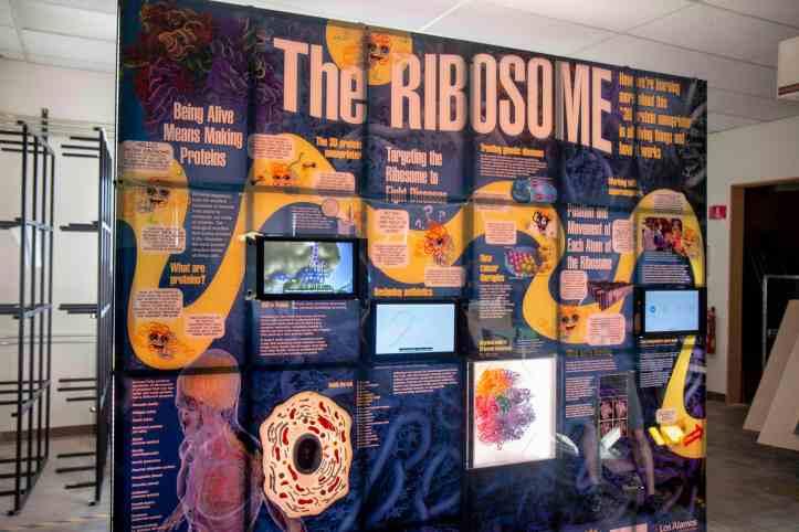 Ribosome Exhibit.jpg