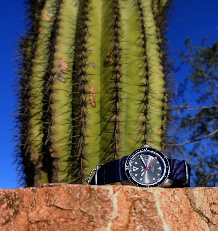 cactusfinal