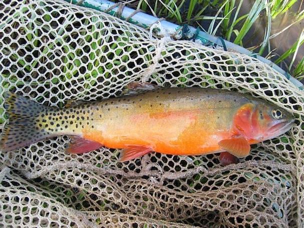Bluewater Lake:Ryatt Turner, age 6, of Bluewater Village caught a 16-inch rainbow trout using green glitter PowerBait Oct. 18.